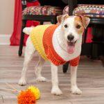 Candy Corn Dog Sweater Free Knitting Pattern