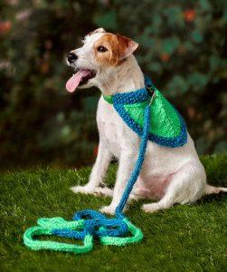 Flashy Dog Leash & Bandana Free Knitting Pattern