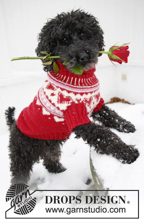 Christmas Dog Sweater Free Knitting Pattern