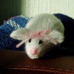 Miss Mouse Free Knitting Pattern