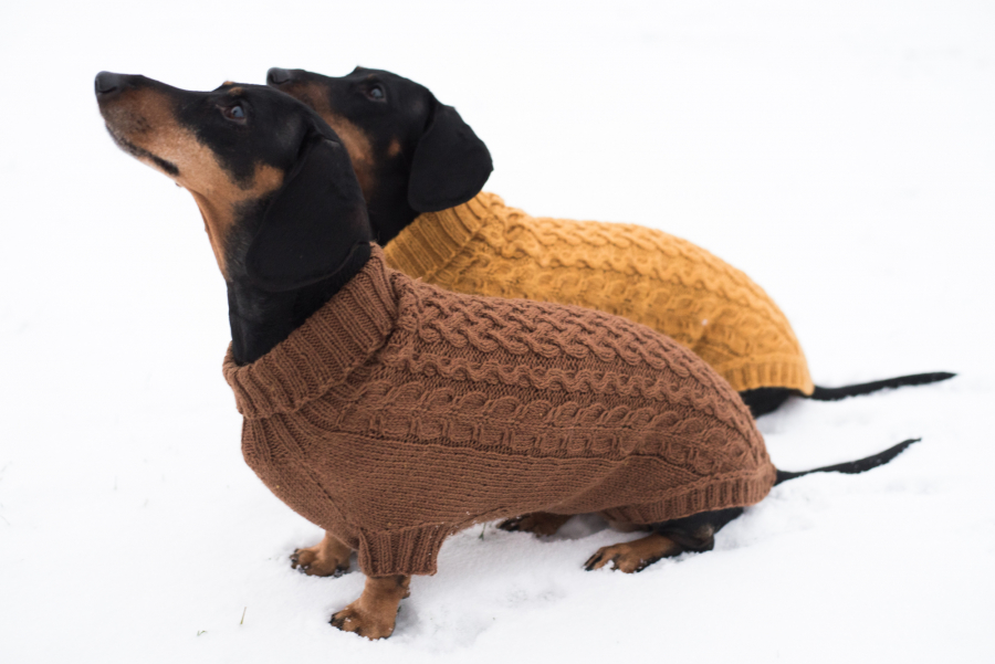 Free Knitting Pattern for a Cabled Dog Sweater